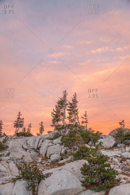 Pine trees set against a pink sunset in Desolation Wilderness outside Tahoe, California