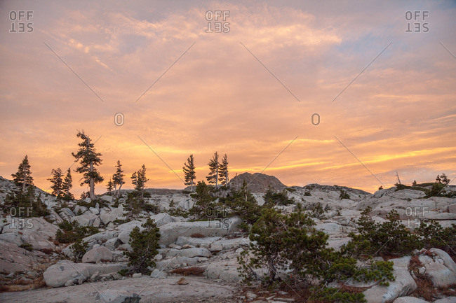 Pine trees set against a sunset in Desolation Wilderness outside Tahoe, California