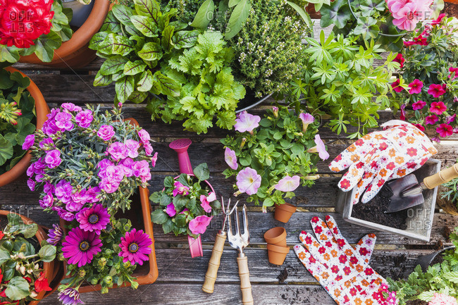 Different medicinal and kitchen herbs and gardening tools