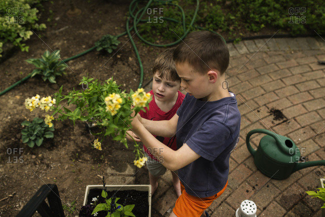 Two brothers planting flowers in a backyard garden