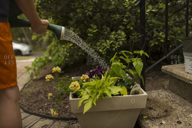 Boy watering flowers with a watering can
