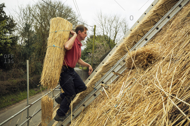 Experienced thatcher carrying a yelm of straw up a roof
