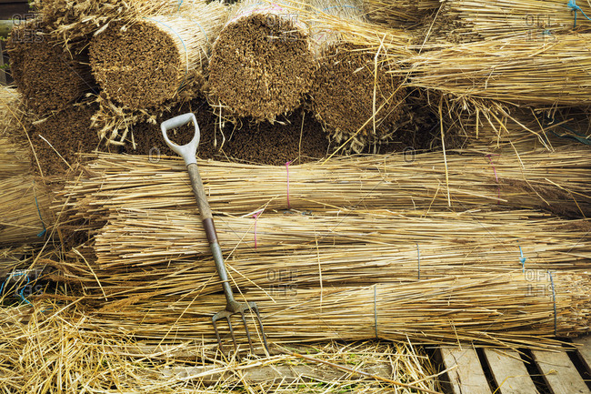 Pitchfork leaning against bundles of straw used for thatching a roof