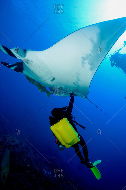 Diver with manta ray - Offset