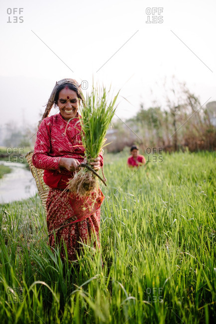 Nepal - March 19, 2016: Woman working outside in a rice field