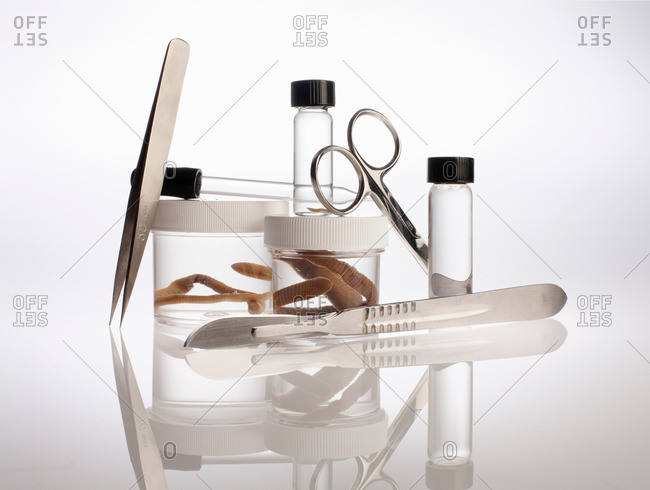 Still life with forensic equipment and preserved earth worms in container