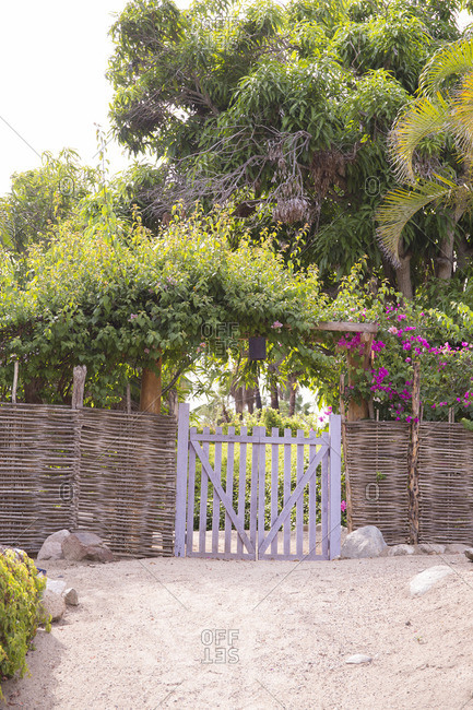 Gate with purple flowers on a vine Baja, Mexico