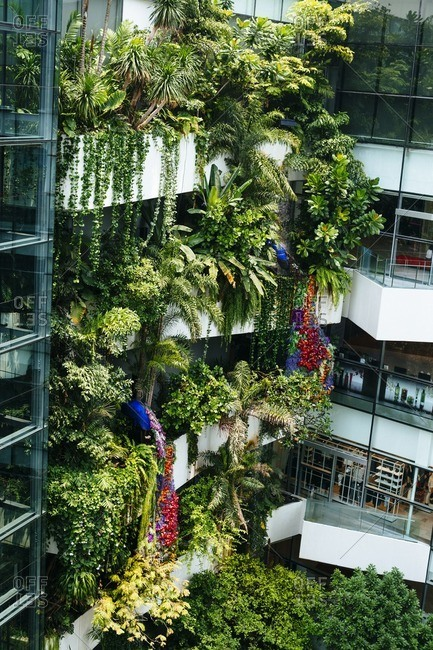 Vegetation in mall in Bangkok, Thailand