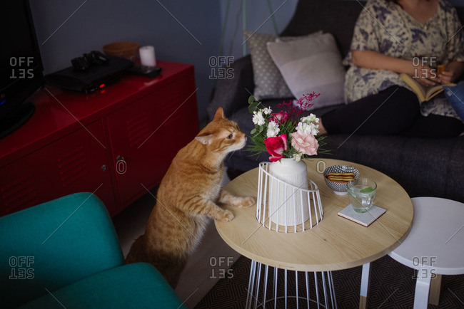 Cat sniffing flowers in a vase