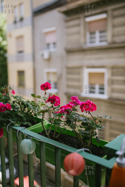 balcony flowers stock photos offset
