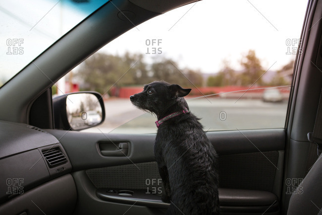 Rear view of dog sitting in car