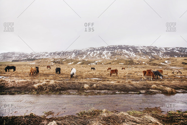 Horses graze in field along a stream