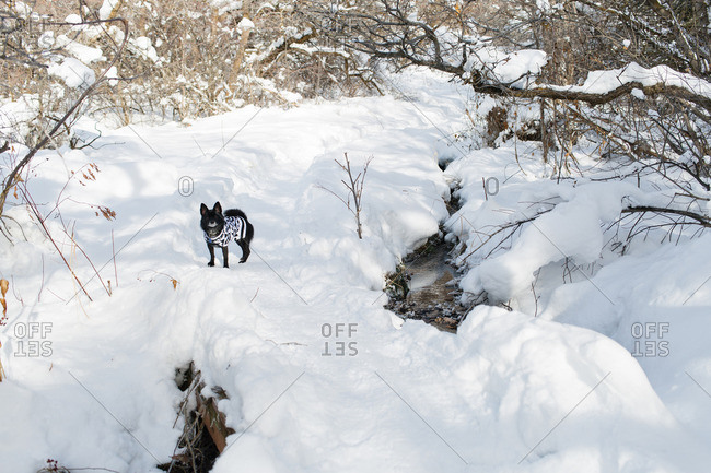 Cute black dog in sweater waits on snowy trail