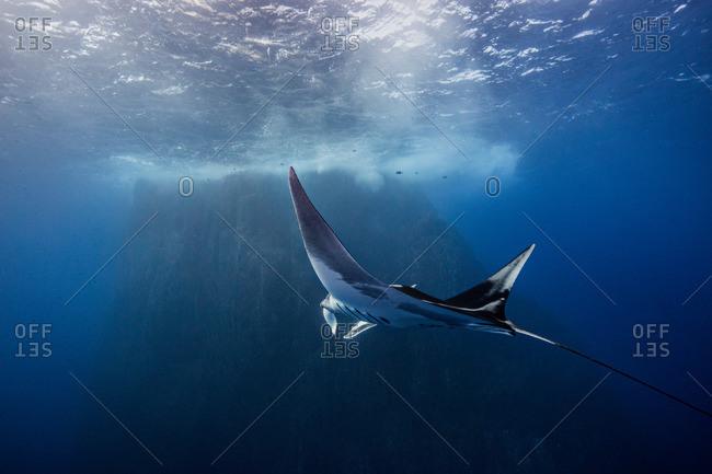 Giant Ocean Manta Ray at Roca Partida Island, Socorro, Mexico