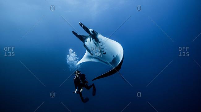 Giant Ocean Manta Ray with diver at Roca Partida Island, Socorro, Mexico