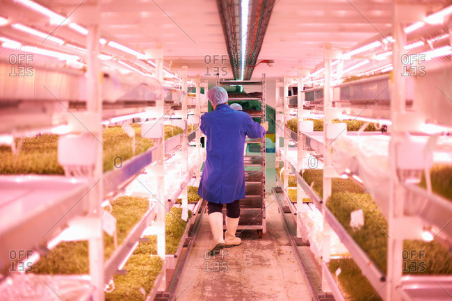 Full length rear view of worker pushing trolley through artificial light growing room