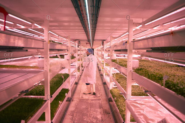 Rear view of worker wearing hair net, overalls and rubber boots checking vegetables growing in artificial light smiling