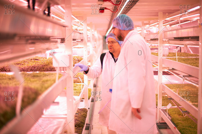 Workers discussing micro greens in underground tunnel nursery