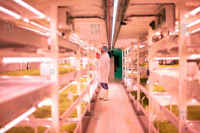 Worker tending micro greens in underground tunnel nursery