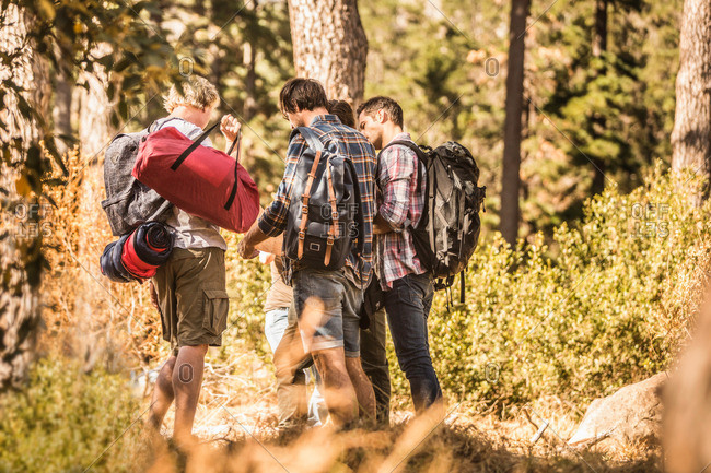 Male hikers reading map in forest