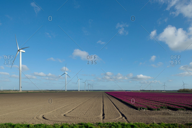 Wind turbines in field on farmland
