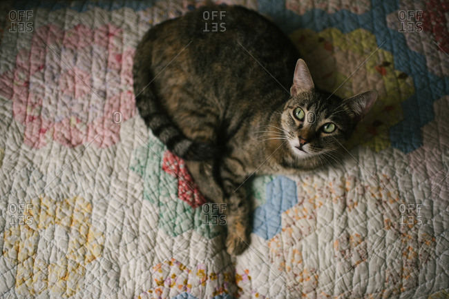 Cat lying on a colorful quilt