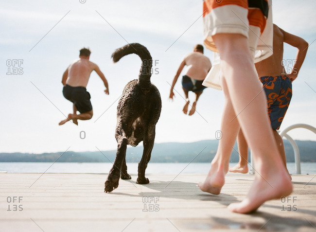 Boys and a dog jumping off of a dock