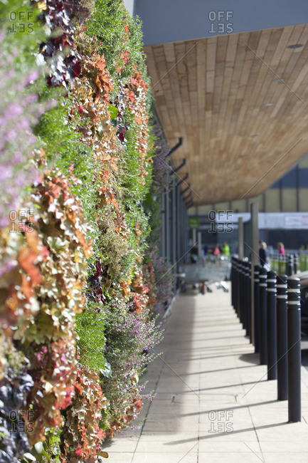 Plants in living wall - Offset