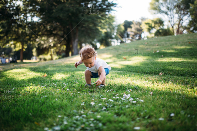 Child picks little flowers in grass