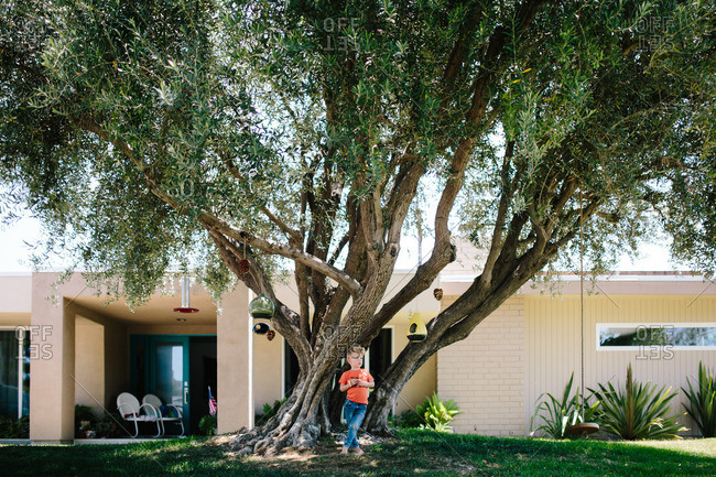 Child stands under tree in front yard