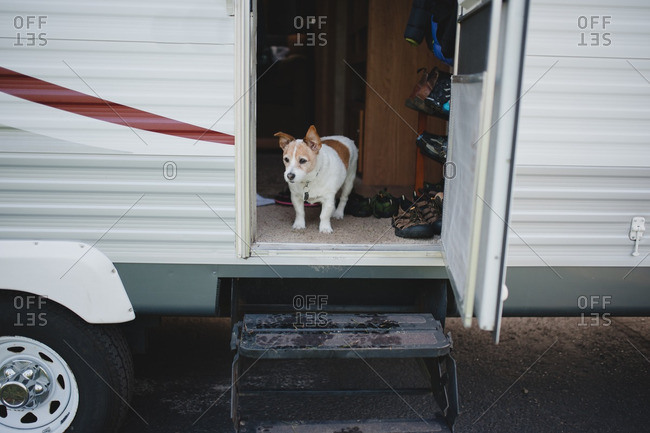 Dog looking out from RV