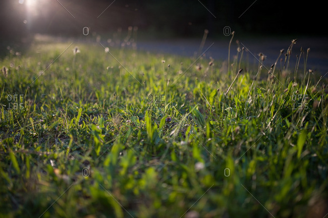 Sunlight through grass in field