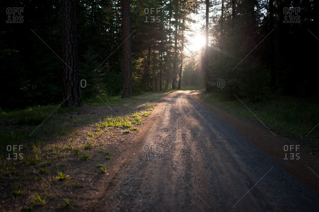Sunlight over path in forest