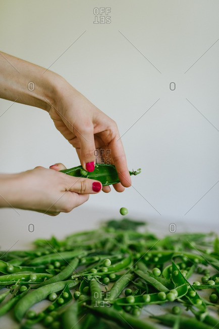 Woman's hands shelling peas