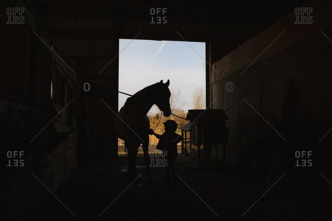 Silhouette of girl grooming horse