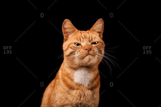 Ginger cat with dissatisfied expression