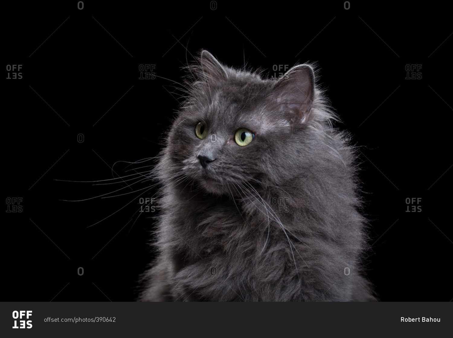 6 year old cat in human years