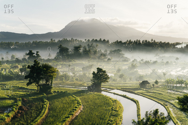 Rice paddies with a volcano, Bali