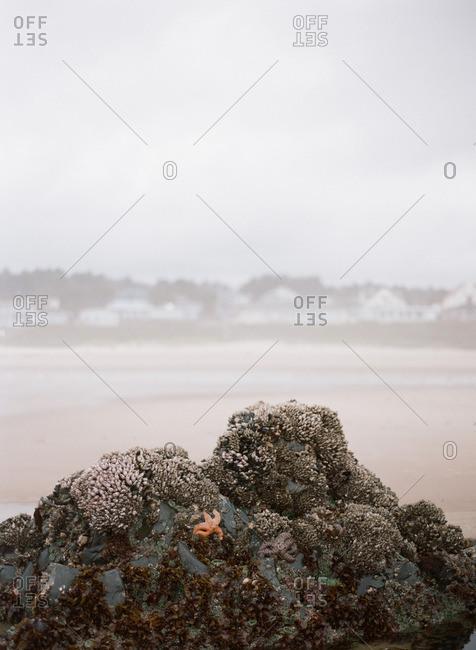 Starfish on a coastal rock