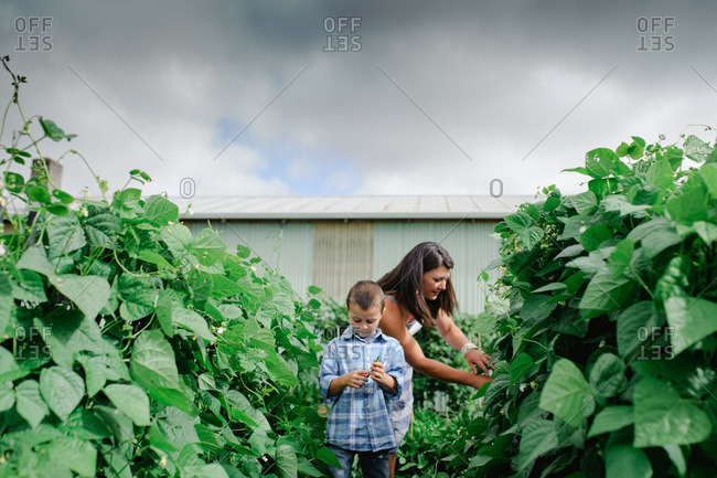 Mother and son picking vegetables in garden