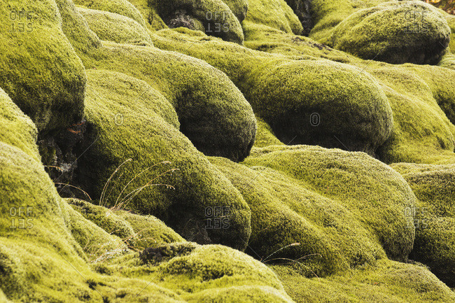 Moss covered lava - Offset Collection