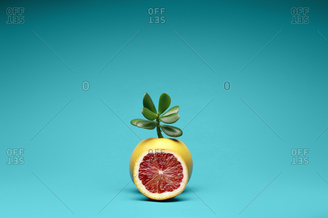 Grapefruit with a missing slice and succulent leaves