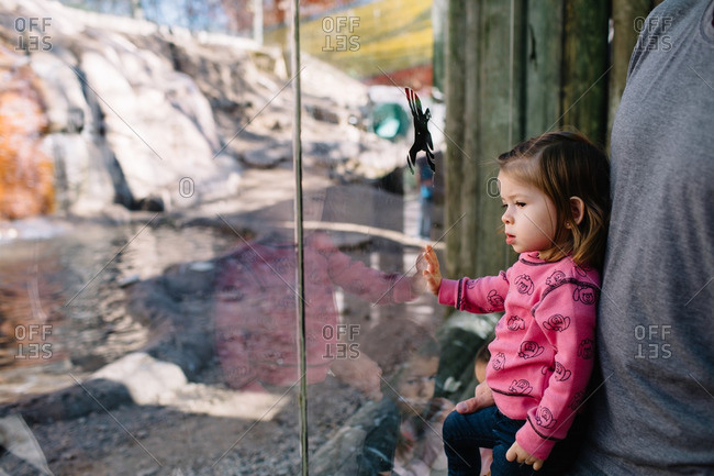 Girl watching a zoo habitat