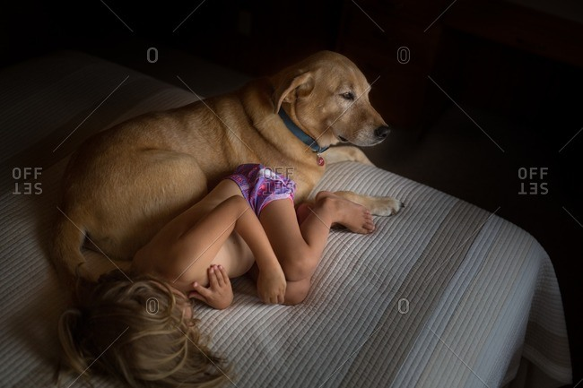 Elevated view of child curled up on bed next to dog