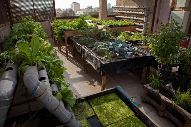 Cairo, Egypt - November 21, 2013: Plants growing in a rooftop garden