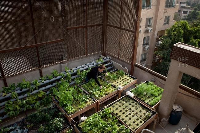 Cairo, Egypt - November 21, 2013: Man working in a rooftop garden