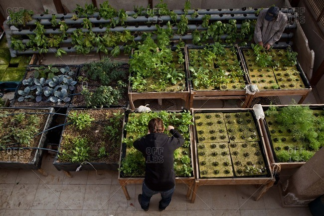 Cairo, Egypt - November 21, 2013: Overhead view of a man working in a rooftop garden