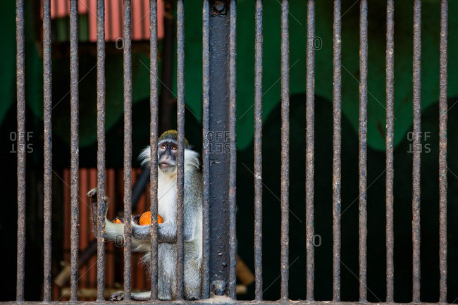 Monkey in a cage at a zoo in Cairo, Egypt