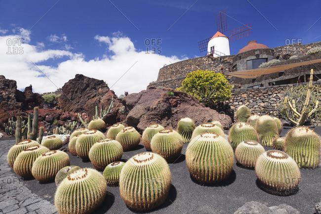 Cactus garden Jardin de Cactus by Cesar Manrique, wind mill, Canary Islands, Spain, Atlantic, Europe