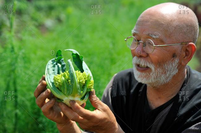 Man looking at romanesco cauliflower